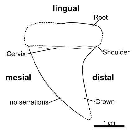 Fig. 3.